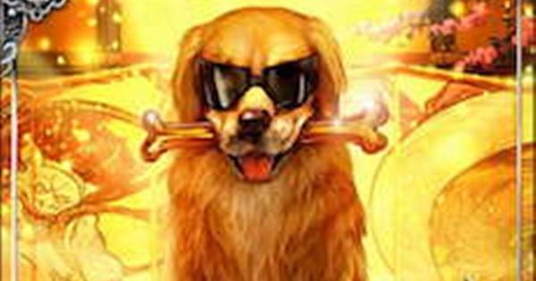 【戦国炎舞】エルドラドSSR1の性能   再来の犬星【戦国炎舞-KIZNA-】