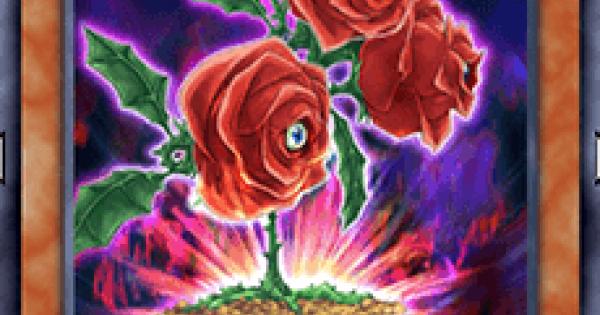 【遊戯王デュエルリンクス】返り咲く薔薇の大輪の評価と入手方法