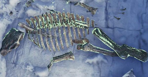 骨系素材の入手方法一覧