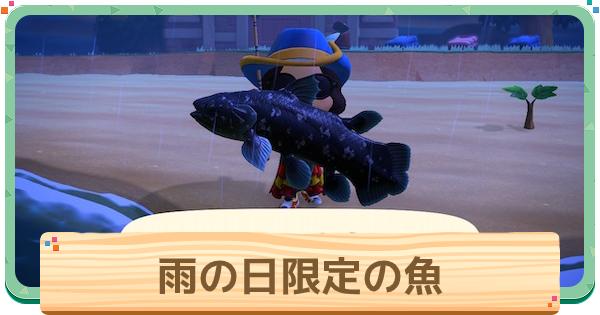 雨の日の魚