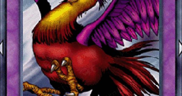 【遊戯王デュエルリンクス】紅陽鳥の評価と入手方法