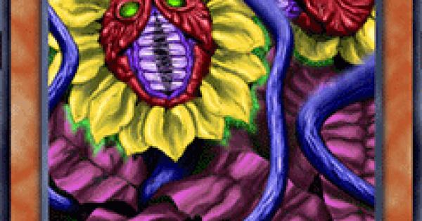 【遊戯王デュエルリンクス】魔草 マンドラゴラの評価と入手方法