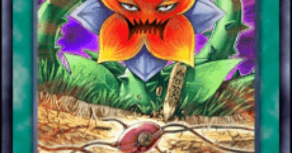 【遊戯王デュエルリンクス】偽りの種の評価と入手方法