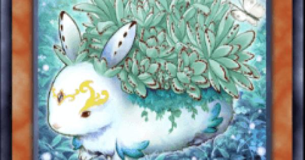 【遊戯王デュエルリンクス】森の聖獣カラントーサの評価と入手方法