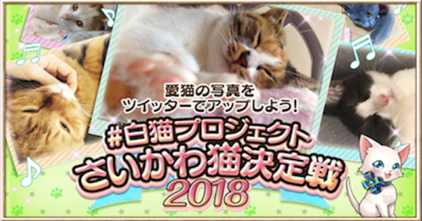 【白猫】さいかわ猫決定戦2018最新情報