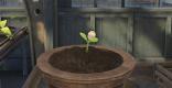 温室で栽培と収穫を行う方法を解説