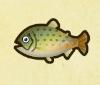 String fish