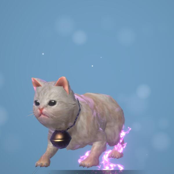 大粒白猫画像