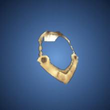 博愛の首輪