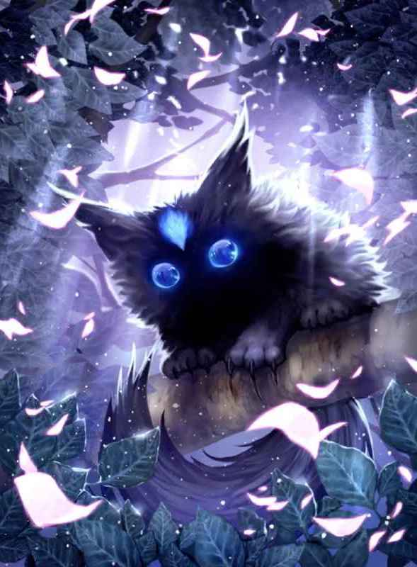影の猫イルア画像