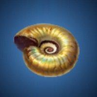 螺環の化石のアイコン